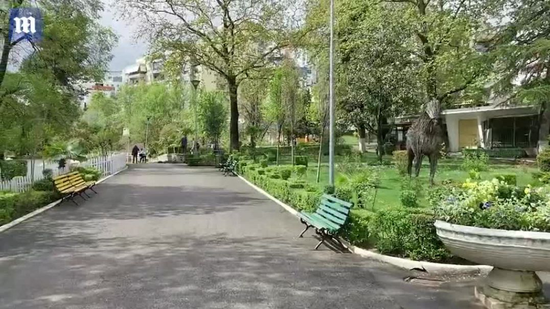 """Luanët e dëmtuar të """"Safari Park"""" pengohen për t'u larguar nga Shqipëria"""