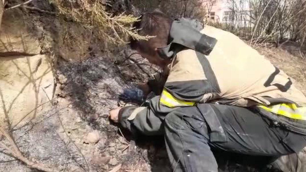 Në luftën me zjarret shpëtohen edhe kafshët