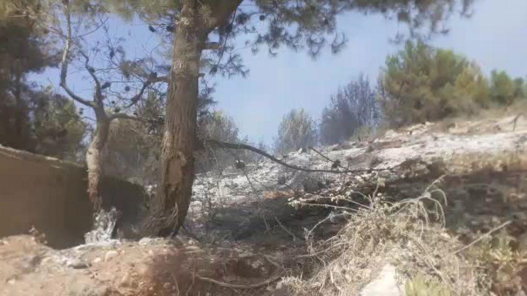 Zjarri shkrumbon kurorën me pisha në Mamurras